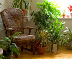 Top 10 Plants for Removing Indoor Toxins