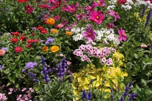 Perennial Flowers Graphic