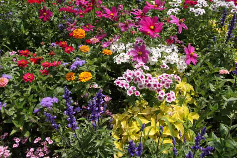 Perennial flower garden ideas photograph choosing and plan for Perennial garden design