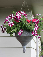 Funnel planter with striped petunias image
