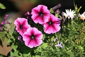 Control Pests of Flowers