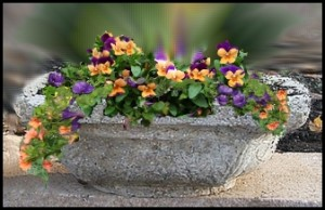 Hypertufa trough with flowers image