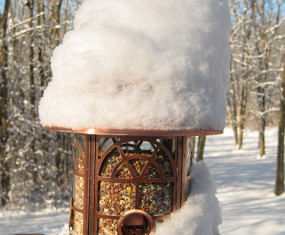 Helping Birds Through The Winter: Feeding
