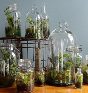 Terrariums with vintage milk crate