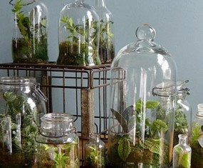 Trendy Terrariums