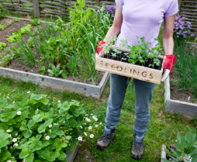 Grow Vegetables in a Raised Bed Garden