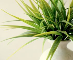 Houseplants Will Brighten Your Home And Your Day!