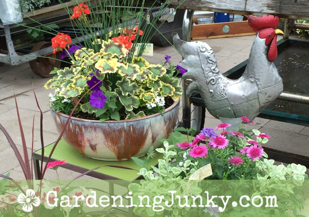 Rooster and planters at Gardening Junky