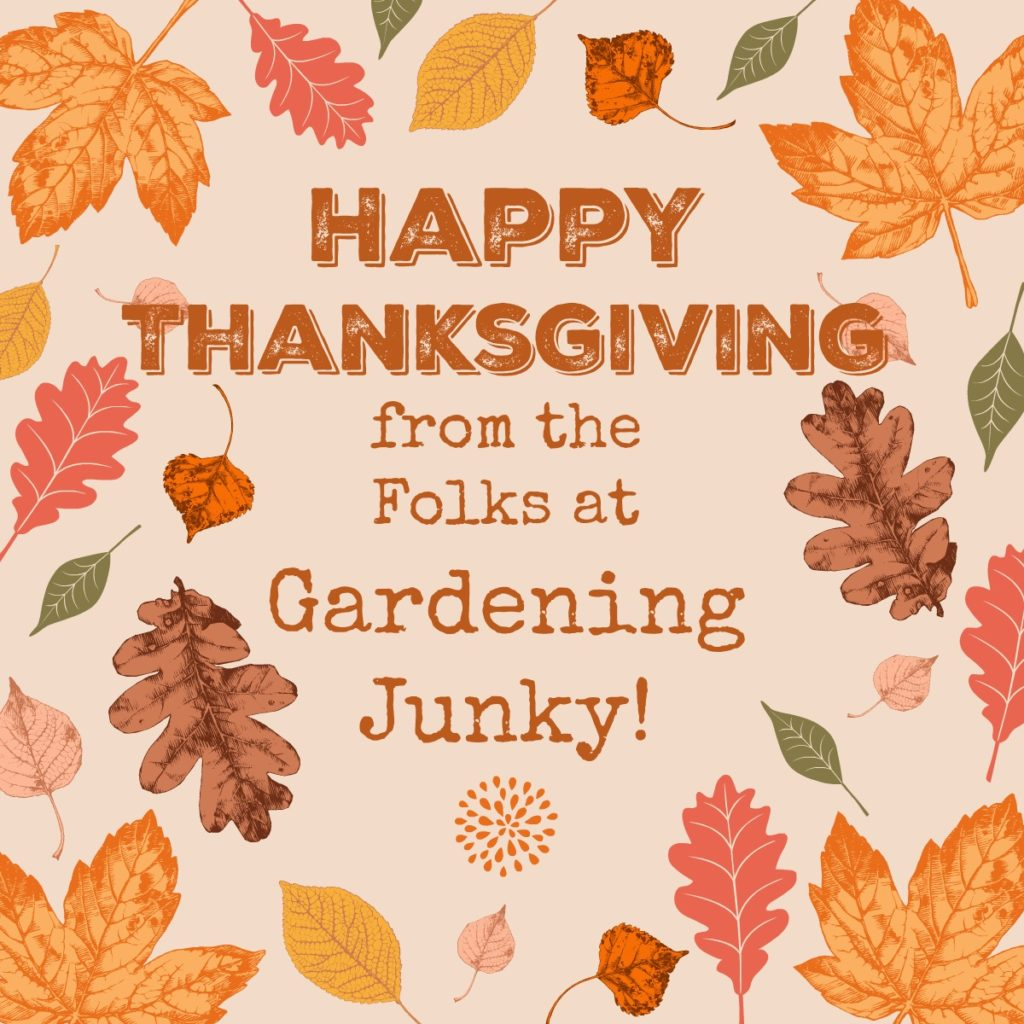 Happy Thanksgiving from Gardening Junky