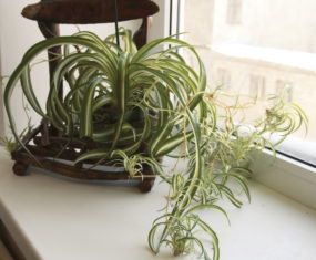 Three Easy Care House Plants