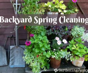 Backyard – Spring Cleaning