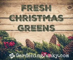 Fresh Christmas Greens 2017