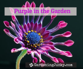 Purple In The Garden